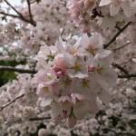 伊賀市岩倉の工場に桜(16.4.6)